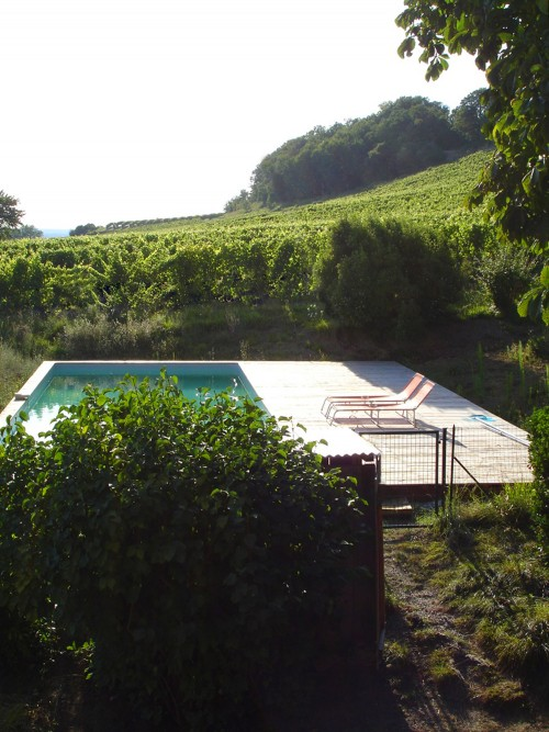 the pool in the vineyards